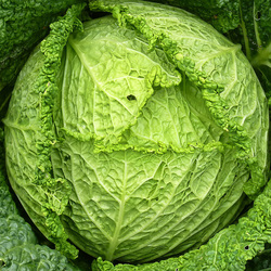 Our Canton Chiropractors recommend cabbage and cruciferous vegetables